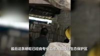 广东一村民家中惊现100多斤超级大蟒蛇 2人联手才抬动