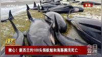 揪心!新西兰约100头领航鲸和海豚搁浅死亡