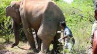 大象腿上肿起巨包,被人类救助后,下一幕画面让人感动