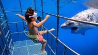 宝宝出现在海底,鲨鱼凑上前,意外发生了,镜头记录全过程!