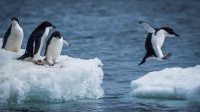 拥有特别情宜的企鹅,你感动哭了吗?