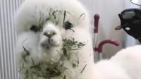 羊驼:看着我干嘛我靠脸吃饭的