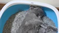 放着好好的猫窝不睡,非要睡猫砂盆,这猫还有救吗?
