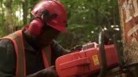 【森林解决方案】巴布亚新几内亚的生态林业