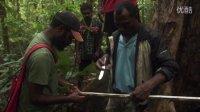 【森林解决方案】巴布亚新几内亚的生态林业4