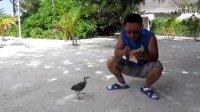 马尔代夫第三天,Velassaru上的和谐生态