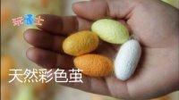 彩色蚕茧,白蚕宝宝吃桑叶吐有色茧,彩茧蚕宝宝蚕种