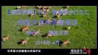 【福星视频】390 - 新春脚步行之二 来到大丰中华麋鹿园