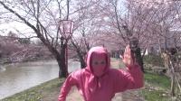 日本第一樱花弘前公园的秘密❤小梦忍者❤