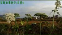 纯音乐mv《 花语》原生态乡村自然风光原创珍彩DJ