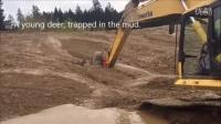 实拍:亮点在最后!挖掘机挖泥 彻底惊呆了...