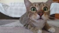 超奇趣搞笑猫咪合集欣赏