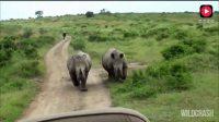"""摄影师靠得太近惹怒""""犀牛"""",结果被追了"""