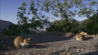 岩合光昭的<猫步走世界>-安达卢西亚篇