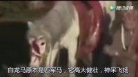 《西游记》白龙马结局悲惨,临死前见到导演,含泪发出一声叹息!