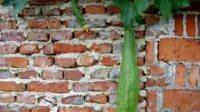 墙壁上的丝瓜