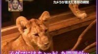 日本动物系列搞笑:被吓坏的小熊