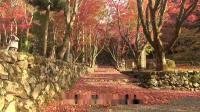 日本之秋  木之本秋叶祭