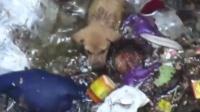 可怜的小流浪狗救助
