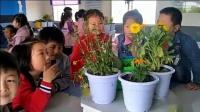 一年級科學《多彩的花》公開課教學視頻