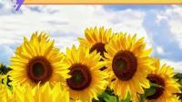 哈尔滨向阳花艺术团