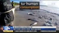 澳大利亚野生三文鱼泛滥没人吃:每斤只卖人民币1.28元  用于龙虾饵料  上海早晨 170509