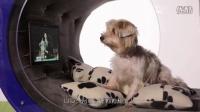 「小王发现」人不如狗系列再度上演,LG G4渲染图曝光