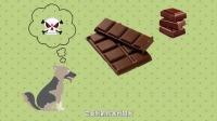【新片场】《你不知道的事》02集 狗狗为什么不能吃巧克力