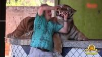刺激 一家人与只老虎同吃同住