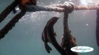 菲律宾科隆沉船潜水
