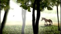 16 野驴与家驴