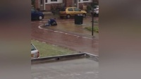 狼狈荷兰男子手脚并用过结冰路面倒垃圾