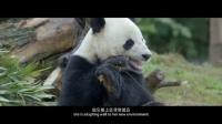 《最美中国》 第二十六集 都江堰 国宝回家