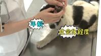 《逗比实验室》:宠物也会恐高吗?
