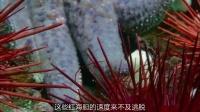 生命脉动08 深海生物