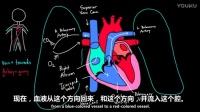 了解心脏工作原理 _ 循环系统生理学