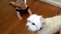 【第2集】记录各种萌宝与狗狗的有爱瞬间