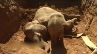 象妈妈跌落沟渠昏迷 小象宝宝反应惹哭众人 161127
