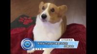 狗狗失恋的反应竟是这样的 笑翻网友 161130