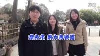 惊奇日本:被奈良的鹿围攻的中国人