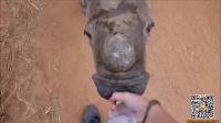 孤儿犀牛宝宝卖力奔跑 下一秒画面超暖心