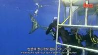 1029 鲨鱼自拍 潜水者给大白鲨拍照