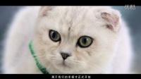 喵星人抢不到-[01集]-【猎豹移动出品】