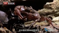 BTV纪实高清 自然世界 第一季 行军蚁君临天下