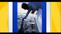 美国渔民捕获上千公斤大白鲨安装追踪器后放生