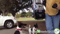 转角遇到爱?动物vs遥控车