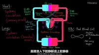 3 循环系统: 人体两大循环系统