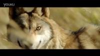 《狼图腾》法国版先行预告片