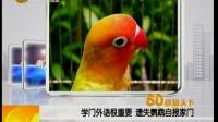 学门外语很重要 遗失鹦鹉自报家门