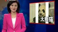 中国大熊猫抵达多伦多 加拿大总理到场迎接